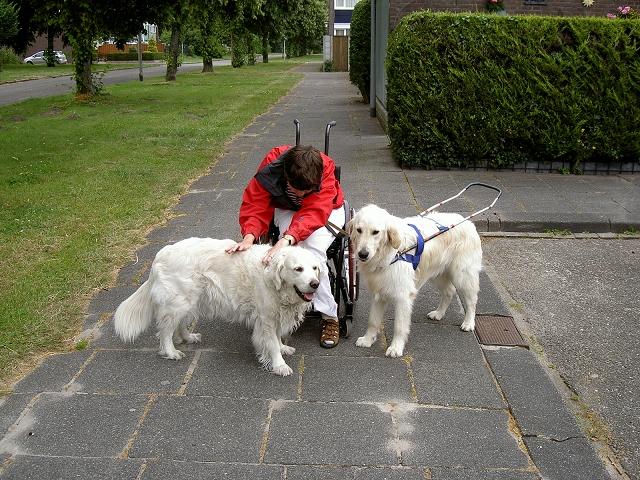Petra geflankeerd door geleidehond Beau en geleidehond in opleiding en in tuig, Ilco.